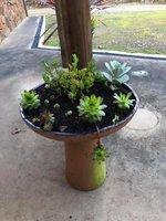 Succulent garden 1.jpg
