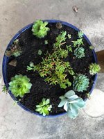 Succulent garden 2.jpg