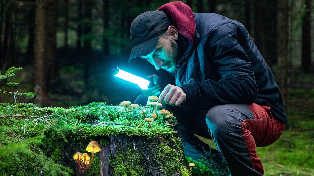 Auch das kann Sport sein: Pilze suchen!