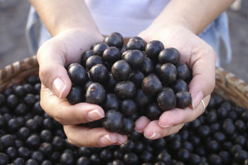 Acai Berries – The Facts