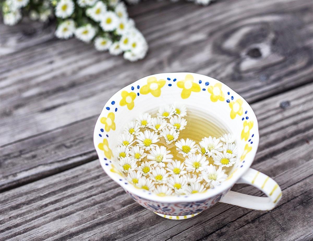 Kamillentee aus frische Kamillenblüten